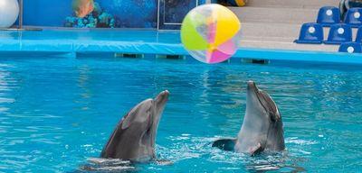 Дельфинарий: оригинальные идеи для подарка