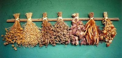 Эти растения защитят вас и ваш дом от сглаза: растительные амулеты от порчи