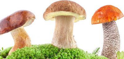 Как чистить грибы: практические советы