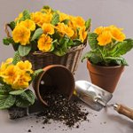 Как пересаживать цветы