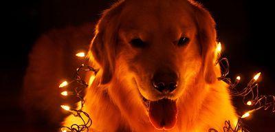 Как встречать 2018 год собаки, чтобы он был самым счастливым