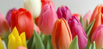 Красивые и оригинальные поздравления с 8 марта в стихах и прозе