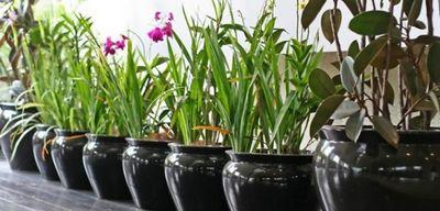 Лунный календарь пересадки комнатных растений 2015
