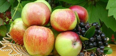 Не тряси яблоню, покуда зелено: когда праздновать яблочный спас