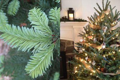 Нужны ли детям живые елки на новый год