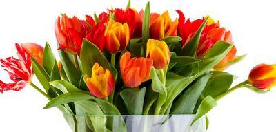 Самые трогательные и красивые стихи на 8 марта любимым женщинам