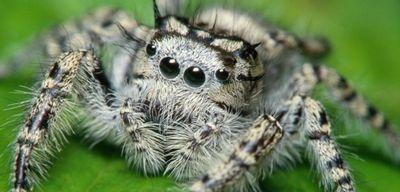 Сон про пауков: что это значит?