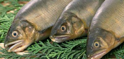 Толкование сна: к чему снится рыба?
